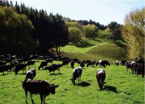 NZ-dairy