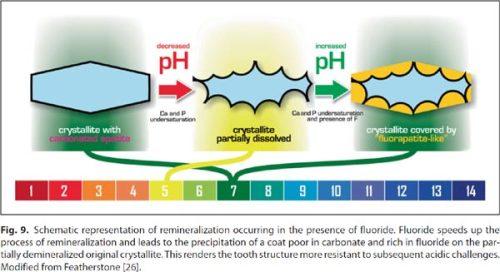 pH-F-effect